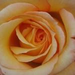Flores…