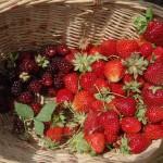 Frambuesas, fresas y albaricoques